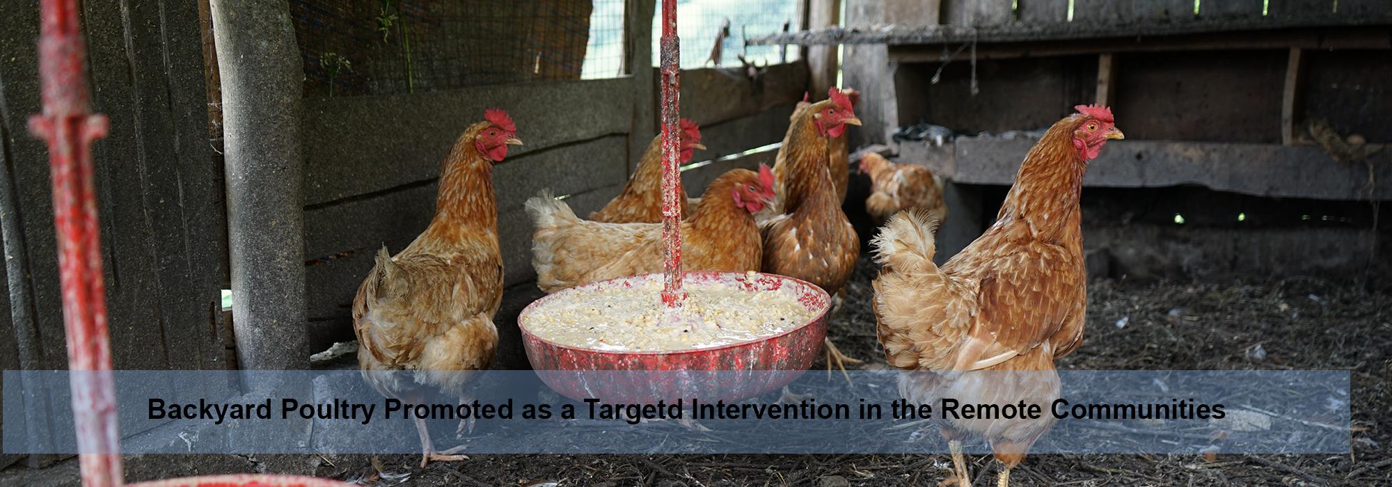 backyard-poultry-farm